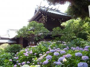 白山神社のあじさい