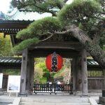 鎌倉長谷寺の紫陽花2016の見ごろ時期や開花状況そして混雑時間は?